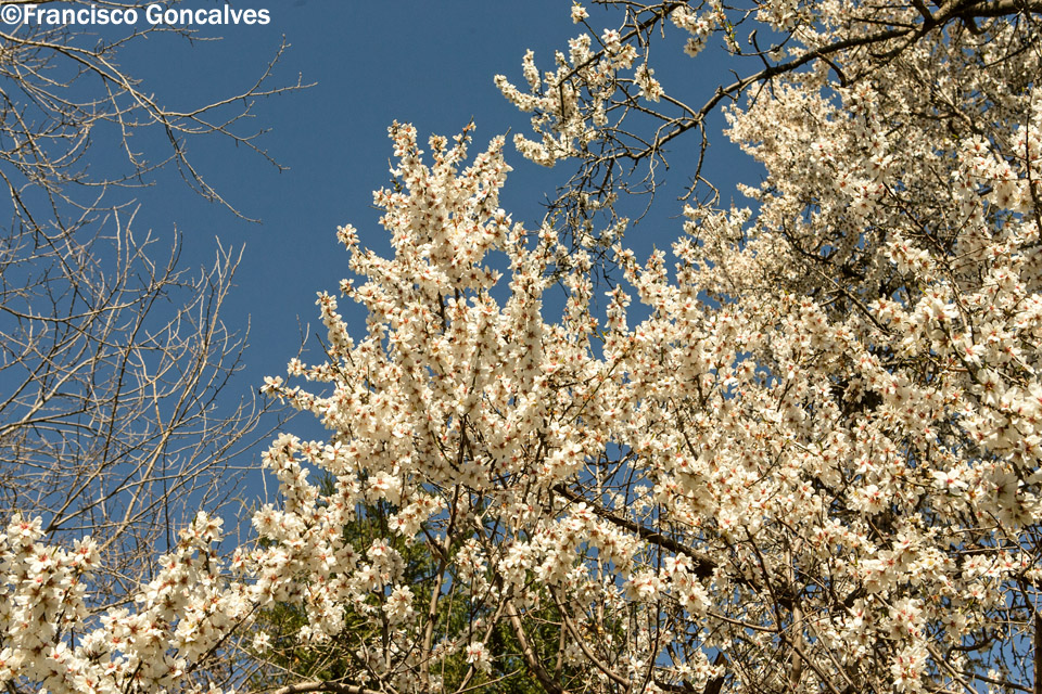 El lugar estaba lleno de almendros en flor / The place was full of almond trees in bloom