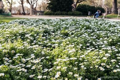 Ahh... la primavera