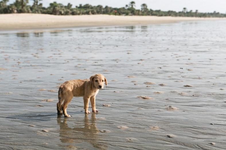 Cachorrito de playa