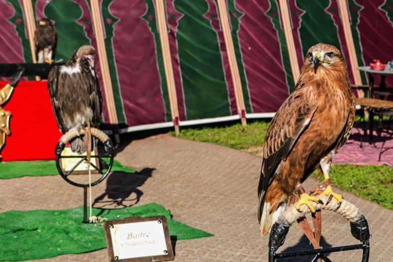 Águila y buitre