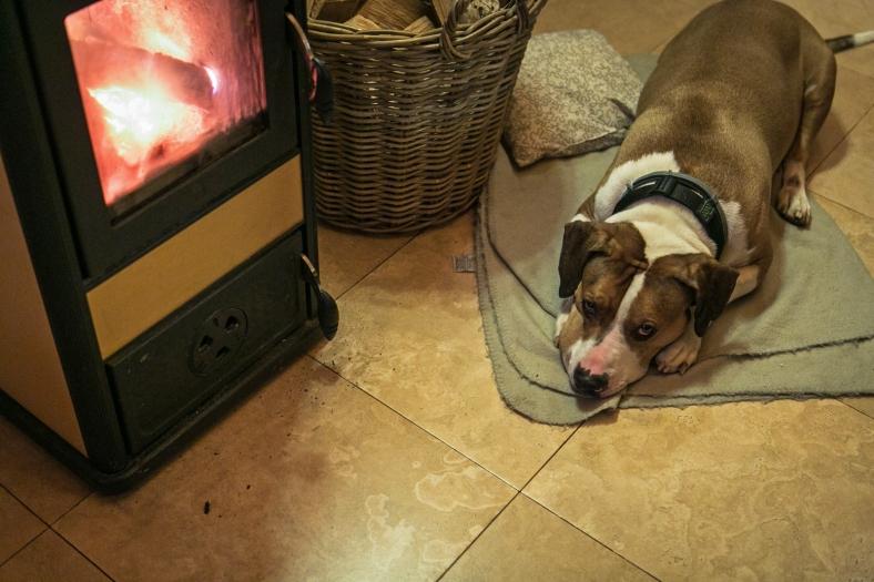 El perro feliz junto a la estufa