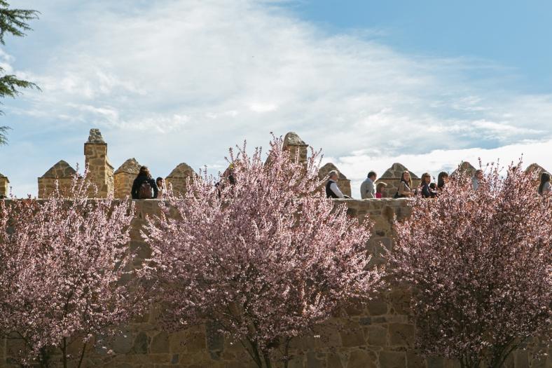 Almendros y la muralla, vistas típicas de Ávila