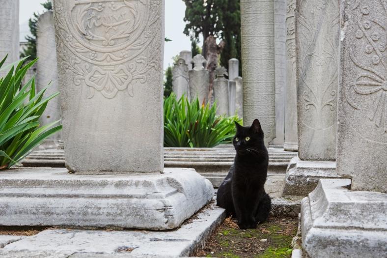 Gatos en el cementerio