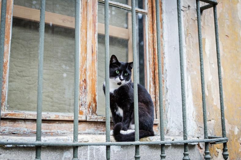 Gato en Beyoglu