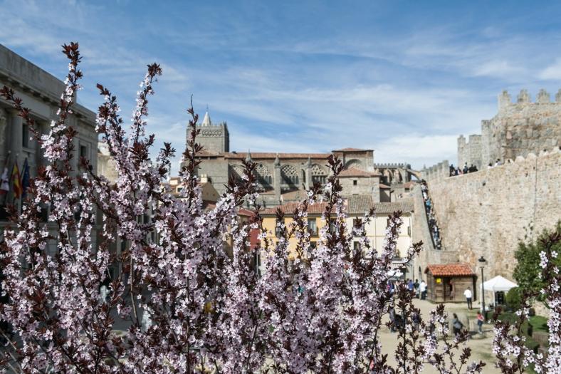 Almendros de Ávila