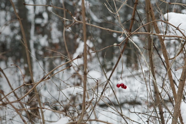 Rojo en medio de tanto blanco